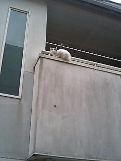 ベランダ猫発見!