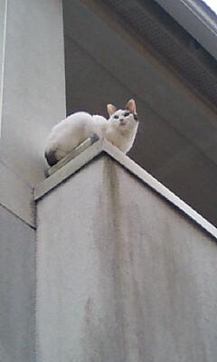 ベランダ猫