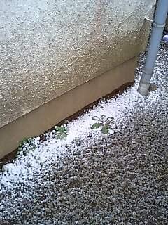 ゆ、雪です