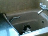 いい風呂だにゃ